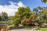 Spain, Gran Canaria, View of garden