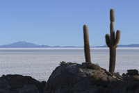 Bolivia, View of Salar de Uyuni and Isla del Pescado