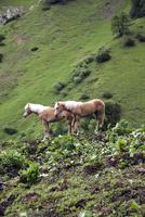 Austria, Horses in alps