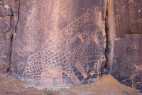 North Africa, Sahara, Algeria, Tassili N'Ajjer National Park, Tadrart, neolithic rock art, rock engraving of a giraffe