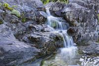 Canada, Vancouver Island, Wally Creek
