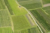 Germany, baden-Wurttenberg, Aerial view fruit plantations near Kressbronn