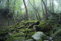Japan, Yakushima, Waterfall in the rainforest, World Heritage, natural site