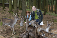 Germany, Bavaria, Munich, girl and his father feeding deers at wildlife park
