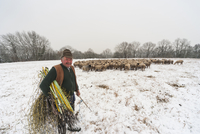 Germany, Rhineland-Palatinate, Neuwied, shepherd and his flock of sheep standing on snow covered pasture 20025330541| 写真素材・ストックフォト・画像・イラスト素材|アマナイメージズ