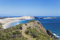 New Zealand, Northland, Cape Reinga area, Man hiking Cape Maria van Diemen Trail 20025330590| 写真素材・ストックフォト・画像・イラスト素材|アマナイメージズ