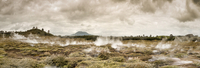 New Zealand, Taupo Volcanic Zone, Craters of the Moon, geothermal field
