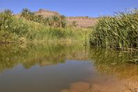 Algeria, Tassili N'Ajjer National Park, Iherir, Water in a guelta at Idaran Canyon