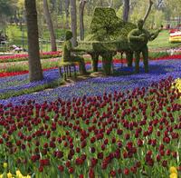 Turkey, Istanbul, Emirgan Park, Tulip Festival, Musician sculptures in tulip bed, Tulipa and Grape hyacinths, Muscari
