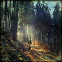 Man walking in forest, composing