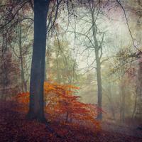 Forest in autumn, alienation