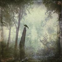 Bird sitting on dead wood in forest, alienation