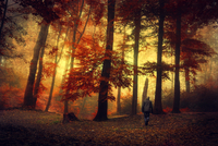 Man walking through autumn forest 20025331138| 写真素材・ストックフォト・画像・イラスト素材|アマナイメージズ