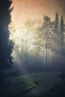 Germany, forest glade in morning light