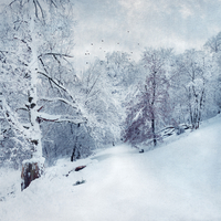 Germany, near Wuppertal, winter landscape, textured effect