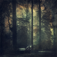 Man sitting on a bench in the forest
