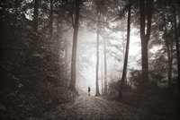 Man walking on forest track in morning mist
