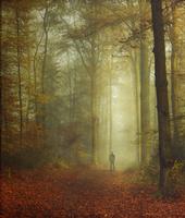 Walker in autumnal forest 20025331590| 写真素材・ストックフォト・画像・イラスト素材|アマナイメージズ
