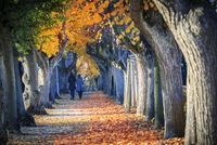 Germany, Bamberg, view to autumnal avenue 20025331648| 写真素材・ストックフォト・画像・イラスト素材|アマナイメージズ