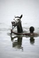 Kenya, Nakuru County, man training horse in the water of Lake Naivasha
