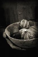 Gourd, Cucurbita pepo