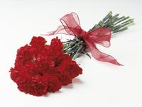 Dianthus caryophyllus, Carnation