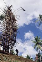 Silhouette of diver, land diving, Pentecost Island, Vanuatu, Pacific Islands, Pacific 20025332602| 写真素材・ストックフォト・画像・イラスト素材|アマナイメージズ