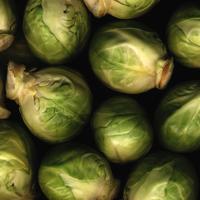 Brussel sprout, Brassica oleracea