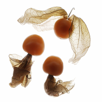 Cape gooseberry, Chinese lantern, Physalis