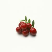 Vaccinium oxycoccos, Cranberry 20025336503| 写真素材・ストックフォト・画像・イラスト素材|アマナイメージズ
