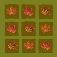 Leaf 20025336510| 写真素材・ストックフォト・画像・イラスト素材|アマナイメージズ