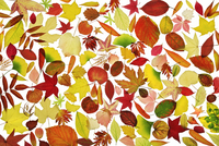 Leaf 20025337087| 写真素材・ストックフォト・画像・イラスト素材|アマナイメージズ