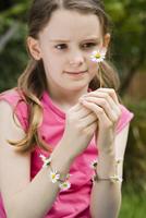 Daisy, Bellis 20025337177| 写真素材・ストックフォト・画像・イラスト素材|アマナイメージズ