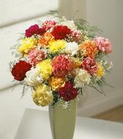 Dianthus, Carnation 20025337493| 写真素材・ストックフォト・画像・イラスト素材|アマナイメージズ