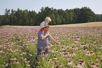 Echinacea, Echinacea pallida, Purple coneflower 20025337899| 写真素材・ストックフォト・画像・イラスト素材|アマナイメージズ
