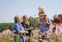Echinacea, Echinacea pallida, Purple coneflower 20025337900| 写真素材・ストックフォト・画像・イラスト素材|アマナイメージズ