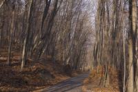 Tree 20025338544| 写真素材・ストックフォト・画像・イラスト素材|アマナイメージズ