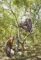 Punica, Pomegranate 20025338852| 写真素材・ストックフォト・画像・イラスト素材|アマナイメージズ