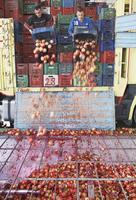 Punica, Pomegranate 20025338860| 写真素材・ストックフォト・画像・イラスト素材|アマナイメージズ