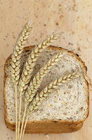 Bread wheat, Triticum aestivum 'Squareheads monster', Wheat
