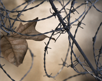 Leaf 20025339170| 写真素材・ストックフォト・画像・イラスト素材|アマナイメージズ