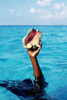Close-up of a person's hand holding a conch shell in the sea, Harbor Island, Abaco, Bahamas