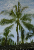 Reflection of palm trees in water Pu'uhonua o Honaunau National Historical Park, Big Island, Hawaii Islands, USA