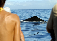 Rear view of three people looking at a whale in the sea, Tahiti, French Polynesia