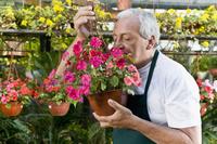Man smelling flowers in a greenhouse 20025341746| 写真素材・ストックフォト・画像・イラスト素材|アマナイメージズ
