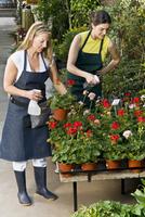 Two women spraying water on plants 20025341778| 写真素材・ストックフォト・画像・イラスト素材|アマナイメージズ