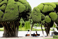 Rear view of a couple sitting in a park,Madrid,Spain