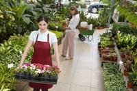 Woman carrying a tray of plants 20025341825| 写真素材・ストックフォト・画像・イラスト素材|アマナイメージズ