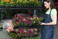 Man and a woman working in a greenhouse 20025341836| 写真素材・ストックフォト・画像・イラスト素材|アマナイメージズ