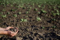 Person's hands holding soil in a field,California,USA
